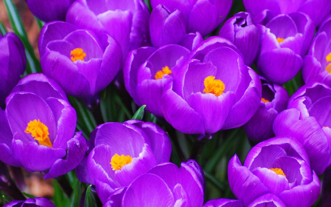 Severe Case of Spring Fever